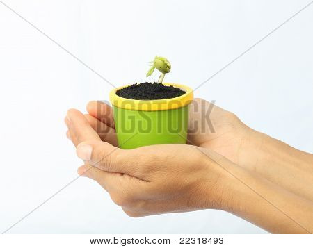 The Young Plant Of The Tamarind In A Hand
