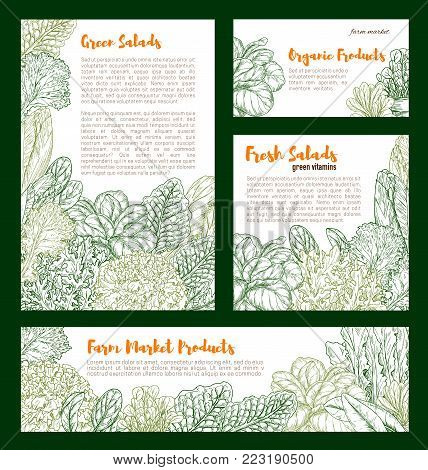 Salads and lettuce vegetables posters and banners templates. Vector sketch sorrel, spinach or pak choi and chicory or radiccio lettuce, arugula and garden oakleaf batavia salad for farm harvest market