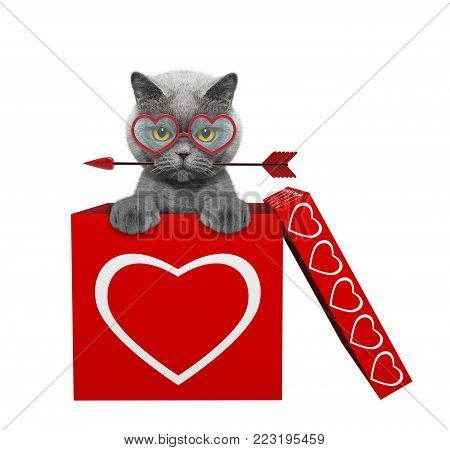 Cat with arrow sitting in valentines box. Isolated on white background