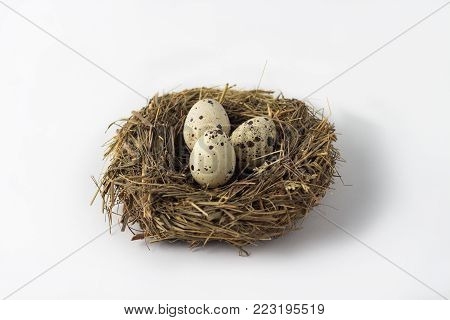 Quail eggs in a nest on a white background.