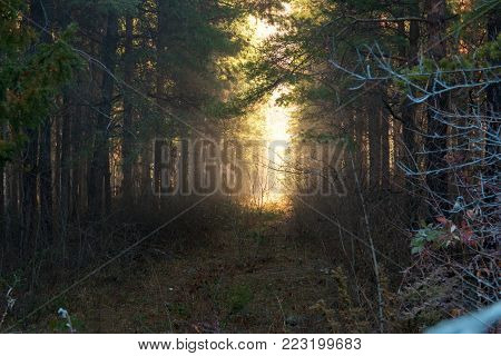 Dramatic fantasy Forest landscape with mystical morning sun light effect. Morning foggy weather.