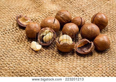 Organic Macadamia nut on hemp sack background, Macadamia integrifolia