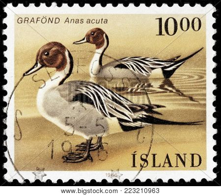 LUGA, RUSSIA - JANUARY 16, 2018: A stamp printed by ICELAND shows the pintail or northern pintail, circa 1986