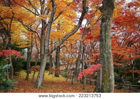 Colorful Autumn Foliage In The Shinnyo Do