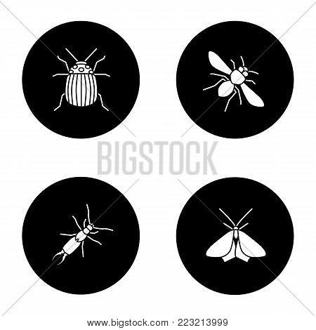 Insects glyph icons set. Colorado beetle, honey bee, earwig, moth. Vector white silhouettes illustrations in black circles