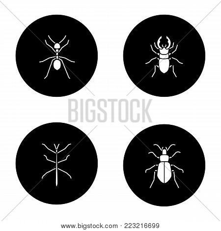 Insects glyph icons set. Ant, stag beetle, ground bug, phasmid. Vector white silhouettes illustrations in black circles