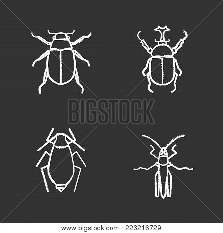 Insects chalk icons set. Chafer, hercules beetle, aphid, grasshopper. Isolated vector chalkboard illustrations