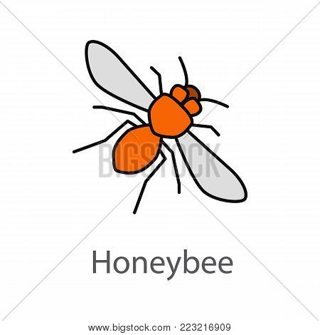 Honey bee color icon. Wasp. Isolated vector illustration