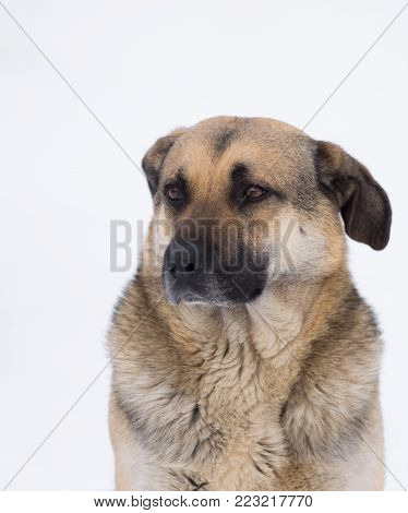 Winter portrait of cute mixed breed stray dog