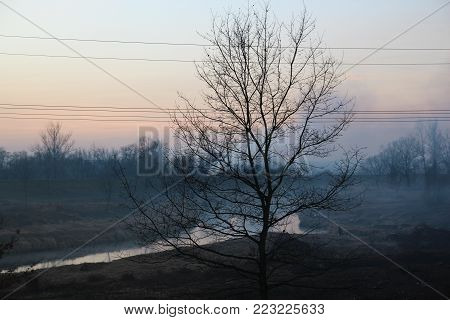 Smog in the valley and a tree in front