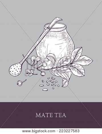 Traditional calabash gourd, bombilla with filter or straw and yerba mate tea plant with leaves and berries hand drawn with contour lines on gray background. Monochrome vector illustration