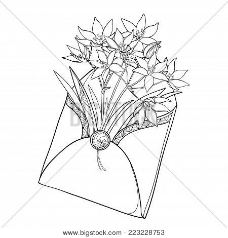 Vector bouquet with outline Ornithogalum or Star-of-Bethlehem flower in opened craft envelope in black isolated on white. Perennial bulbous plant in contour style for spring design or coloring book.
