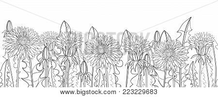 Vector horizontal border with outline Dandelion flower, bud and ornate leaves in black isolated on white background. Dandelion field for herbal spring design, coloring book in contour style.