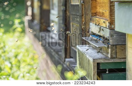 entrance of a beehive with lots of bees in sunny ambiance