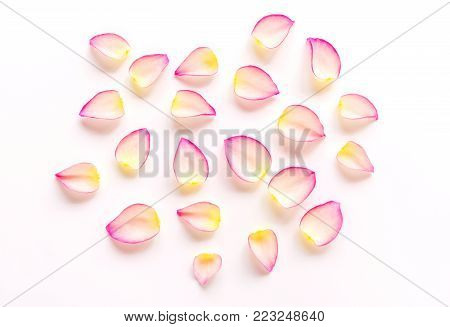 White pink beautiful rose flower petals on white background with space, single petal as pattern for natural sweet love concept on Valentines day, wedding, special occasion celebration or skin cosmetic