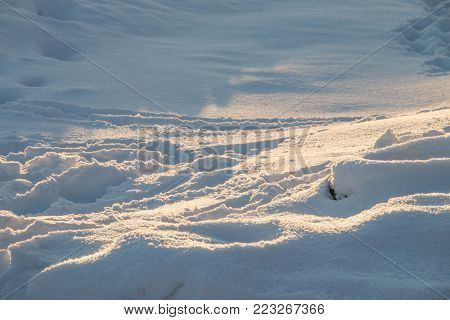 traces in the fresh snow in the rays of the evening sun at sunset