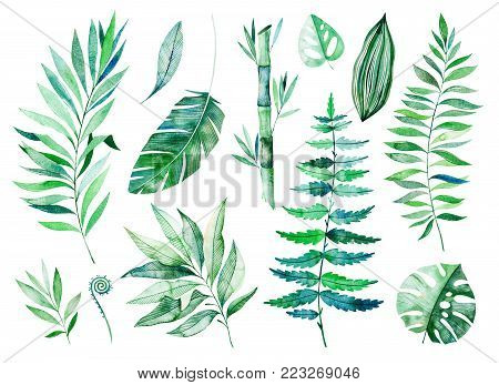 Texture with greens,branch, leaves, tropical leaves, bamboo