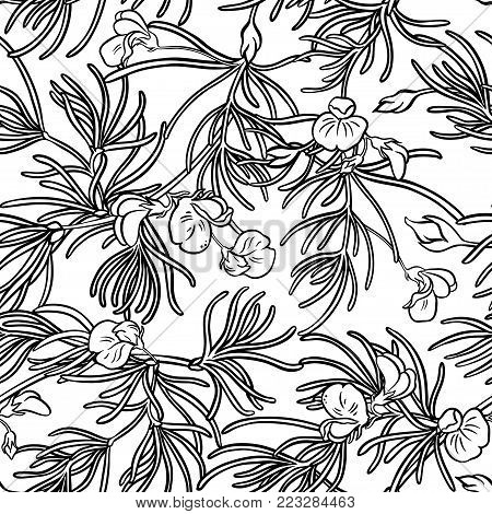 rooibos plant seamless pattern on white background