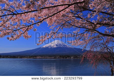 Cherry blossoms bloom completely and Mount. Fuji from Lake Kawaguchi Japan 04/20/2017