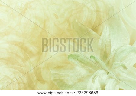 Floral  abstract light green-white-yellow background.   Petals of a lily flower on a white-green frosty background. Close-up. Flower collage for postcard.  Nature.