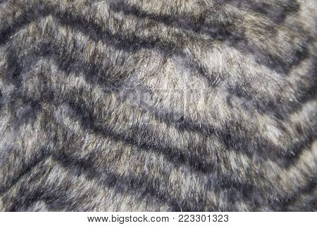 The grey faux fur texture for background