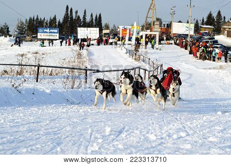 POLAZNA, RUSSIA - JANUARY 21, 2018: five huskies in harness run and pull sled at the annual dog sled racing in the Perm krai