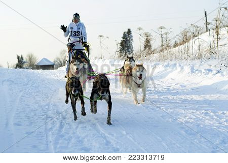 POLAZNA, RUSSIA - JANUARY 21, 2018: A team of four huskies and two gundogs as leaders at the regional dog sled competitions in the Perm krai.