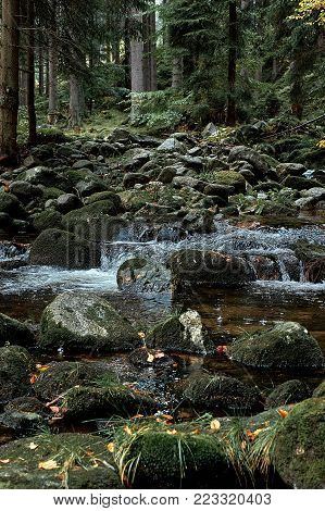 Brook or creek in nature pine Scandinavian mountain forest in evening light. Wet cold rock stones covered with northern moss. Nordic spruce tree forest background Travel concept. Portrait view.