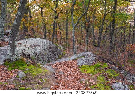 Lichens and moss on the trees and rocks along this hiking trail in  Jenny Jump State Forest in New Jersey.