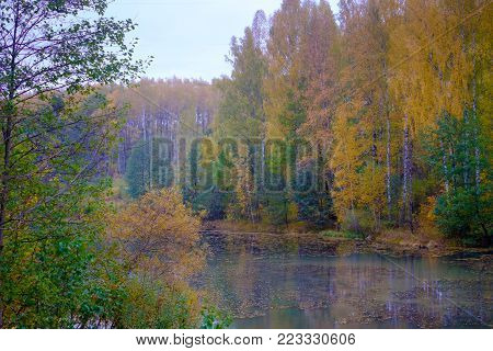 Beautiful forest landscape near the river in the fall. Colorful thick of the forest, in the forest is the river into which the leaves fell.