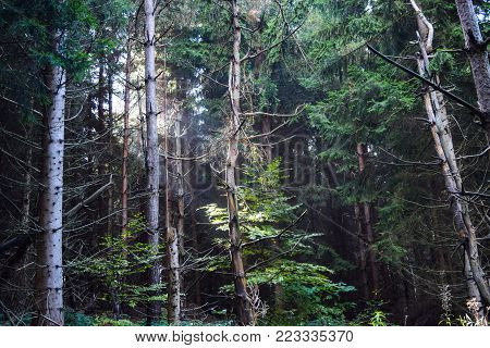 Sun rays shining through the trees during a late summer morning in the forrest.