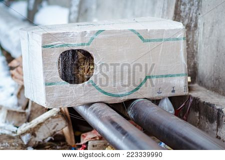 stray animals in winter, homeless cat sitting on a heating main, homeless frozen cat warms on pipes, people making a house out of a box for a homeless cat, warm house out of a box for a homeless cat