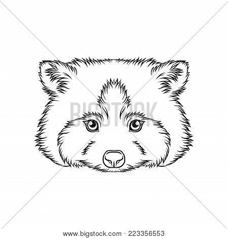 Sketch of raccoons head, portrait of forest animal black and white hand drawn vector Illustration on a white background