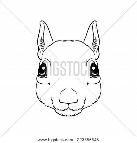 Sketch of squirrels head, portrait of forest animal black and white hand drawn vector Illustration on a white background
