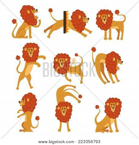 Collection of lion in various poses. Cartoon character of wild African animal. Big strong predator. Zoo theme. Flat vector illustration isolated on white. Design for sticker, kids print or book.