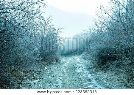 White-frost covered over grass, tress and road in early winter. Foggy weather.