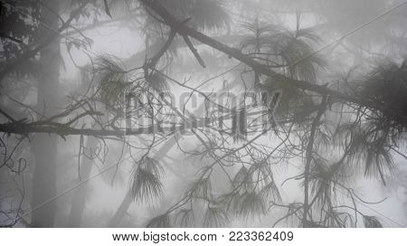 A Creepy Mist in the middle of woodland