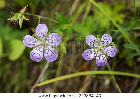 Two beautiful purple flowers. Two Purple flowers.Purple Flowers Macro