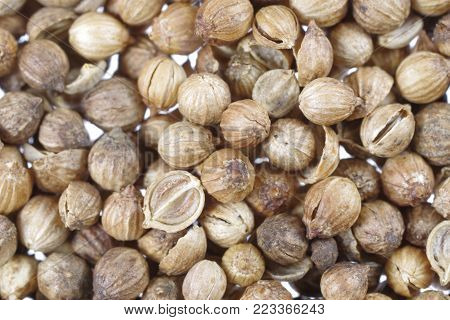 background with dry coriander seeds close up