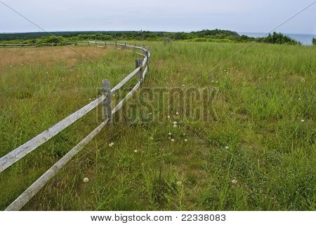 Coastline Meadow