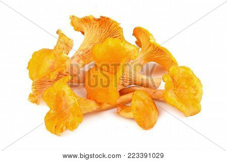 Yellow chanterelles mushrooms on a white background
