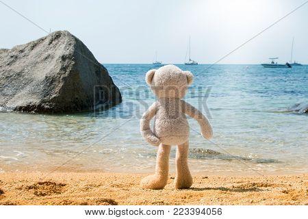 Teddy Bear Looking Out To Sea Drinking Orange Juice