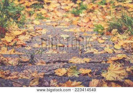 Closeup Of Autum Leaves Fallen On A Stairway