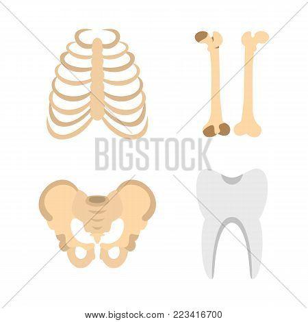 Human bones icon set. Flat set of human bones vector icons for web design isolated on white background