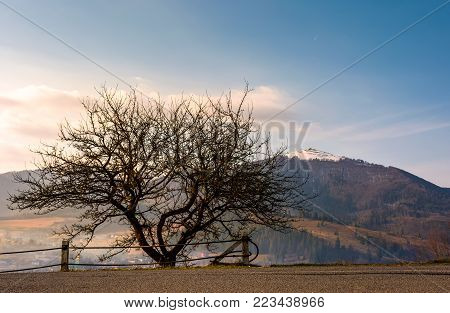 leafless tree by the road in mountains. lovely forenoon springtime scenery of Carpathians. Location Volovets town, Ukraine