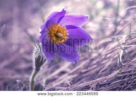 Delicate flowers in lilac shades on a beautiful background. Purple toning.