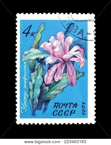 SOVIET UNION - CIRCA 1971 : Cancelled postage stamp printed by Soviet Union, that shows Cactus epiphyllum.