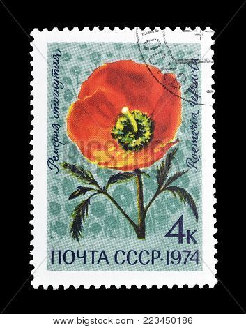 SOVIET UNION - CIRCA 1977 : Cancelled postage stamp printed by Soviet Union, that shows Spotted Asian Poppy.