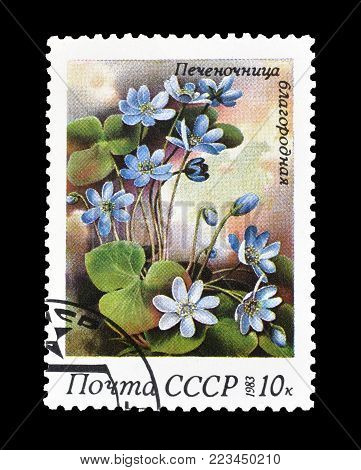 SOVIET UNION - CIRCA 1983 : Cancelled postage stamp printed by Soviet Union, that shows  Anemone hepatica.