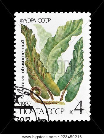 SOVIET UNION - CIRCA 1987 : Cancelled postage stamp printed by Soviet Union, that shows Fern  Scolopendrium vulgare.